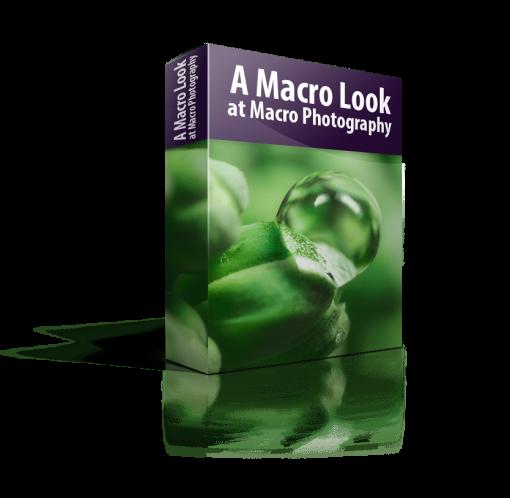 A Macro Look at Macro