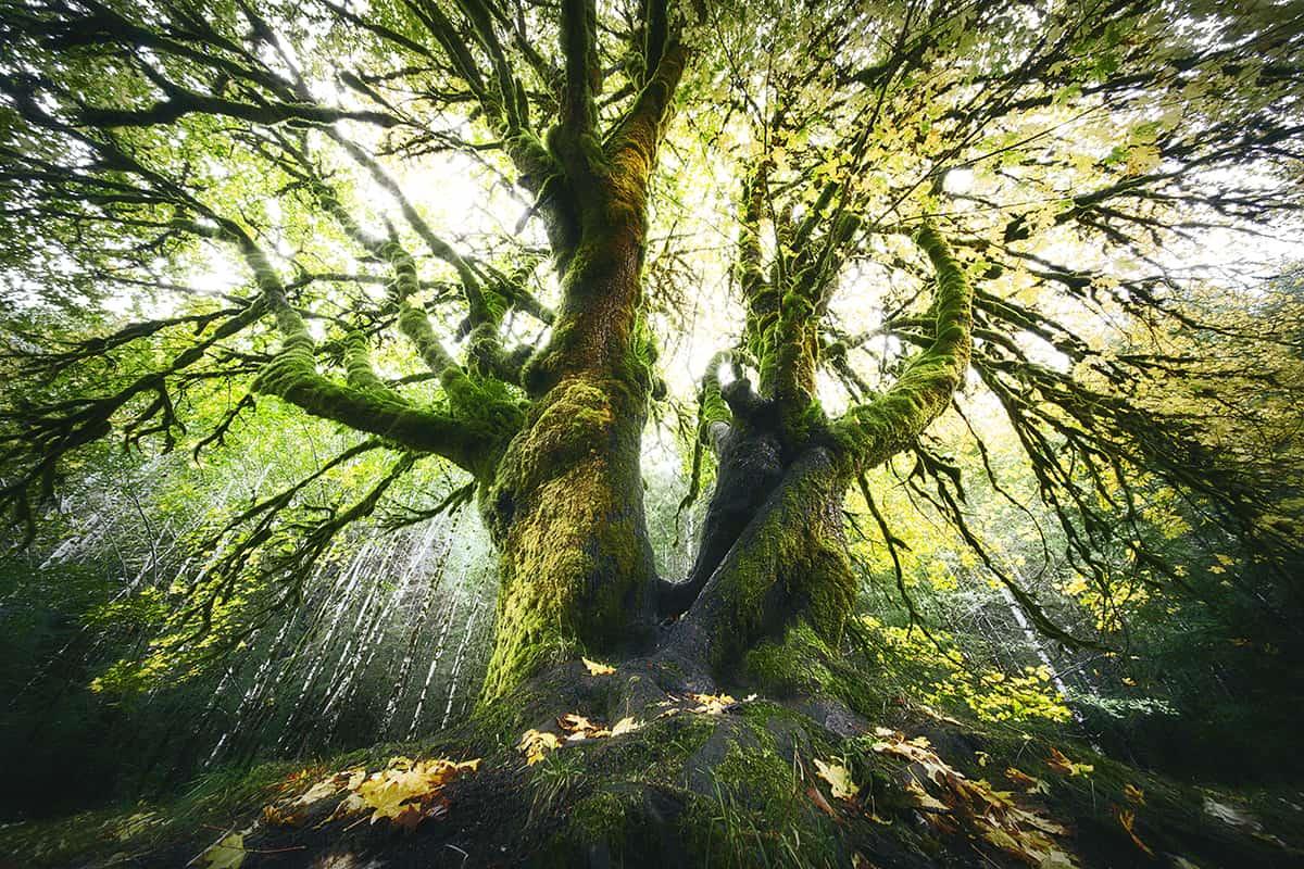 Rainforests (2)