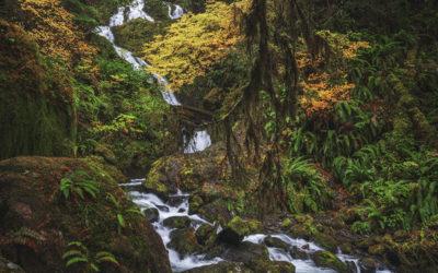 October 2019 Challenge: Fall Foliage