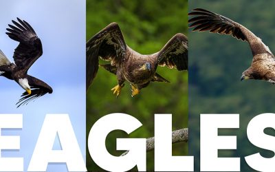 EAGLE Photography with special Matt K Appearance